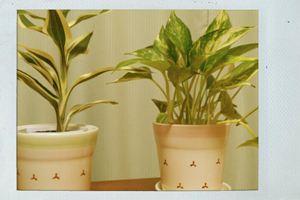 にゅー植物(・∀・)
